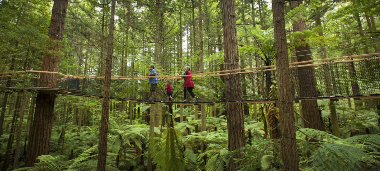 Redwoods Treewalk
